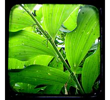 Green - TTV Photographic Print