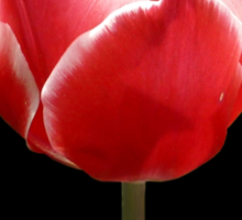 Tulip flower Sticker