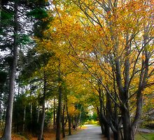 Fall in Point Pleasant Park by Paul Clarke