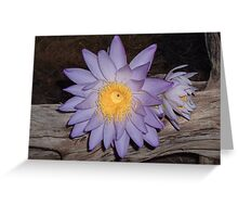 Waterlilly by the Firelight 3 Greeting Card