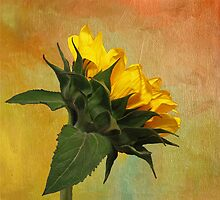 Painted Golden Beauty by Judy Vincent