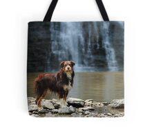 Australian Shepherd at the Waterfall Tote Bag