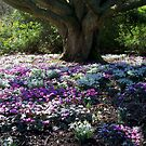 A Mix of Snowdrops and Cyclamen  by hootonles