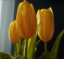 Yellow Tulips in the Winter by goddarb