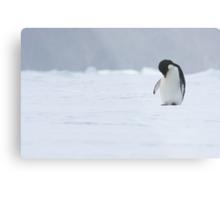 Solo Penguin 2 Metal Print