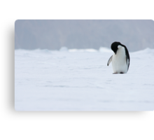 Solo Penguin 2 Canvas Print