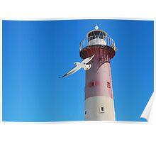 Pacific Gull--Troubridge Island Poster