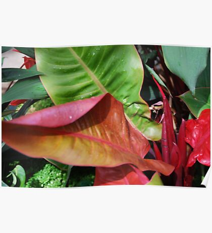 red and green leaves Poster