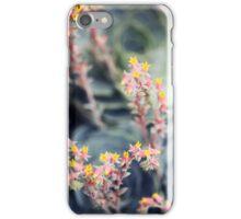 Echeveria #2 iPhone Case/Skin