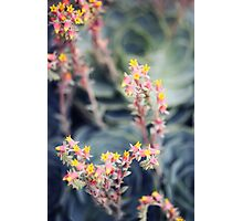Echeveria #2 Photographic Print
