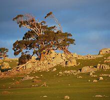 Sunset Heathcote 1 by GuyR