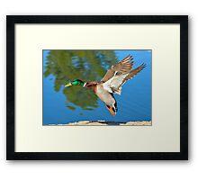 Drake Landing Framed Print