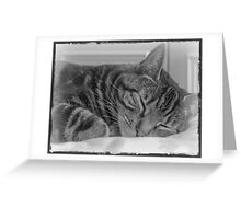 Sleeping Cat in Black and White Greeting Card