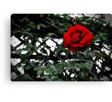 Red Rose - Villandry Canvas Print