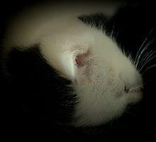 The Best Sleeps by Ladymoose