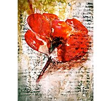 The Poppy Journals...Words in Music Photographic Print