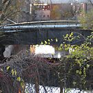 Hamilton Canal by Stormoak Lonewind