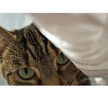 Green Eyed Cat peek-a-boo Photographic Print