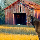 The Red Barn and Horse by Mary Campbell