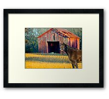 The Red Barn and Horse Framed Print