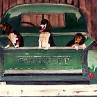 Three Dogs and a Truck by Polly Peacock