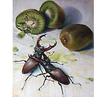""" Kiwis and Stag Beetles ( Struggle for Constancy)"" Photographic Print"
