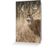 Whitetail Buck Greeting Card