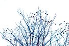 A Partridge in a Pear Tree - Blue by Mary Campbell