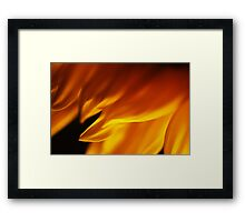 Sunflower Petals #1 Framed Print