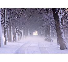 Snowy Winter Alley in Park Photographic Print