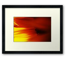 Sunflower Petals #3 Framed Print