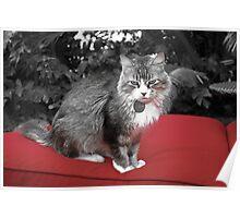 Taz the Cat Poster