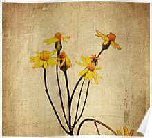 Golden Ragwort - Textured Poster
