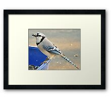 Return Of The Seed Thief Framed Print