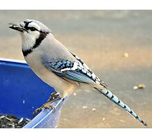 Return Of The Seed Thief Photographic Print