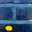 Dandelion Series Blue by Eric Abernethy