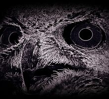 Wired Horned Owl Song by Tim Holmes