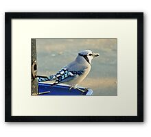 Seed Thief 3 Framed Print