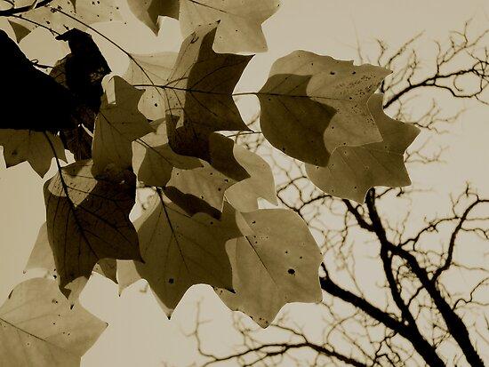 Turning to Winter by Mojca Savicki
