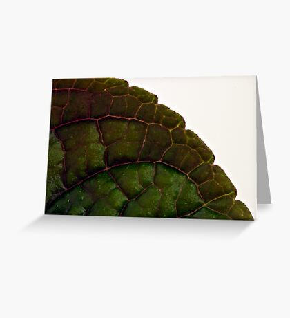 Plecanthrus Leaf Details - Macro  Greeting Card
