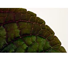 Plecanthrus Leaf Details - Macro  Photographic Print