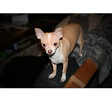 Daisy Dog Photographic Print