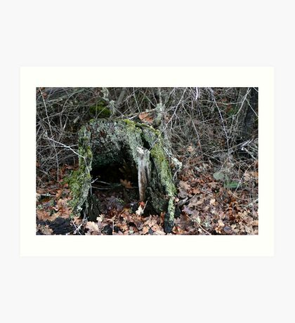 Hollow Stump Art Print
