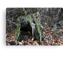 Hollow Stump Canvas Print