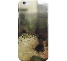 Frog On Glass iPhone Case/Skin