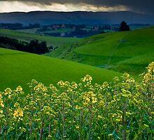 Catlins Farm by Neil