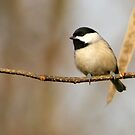 SWEET CHICKADEE by Lori Deiter