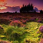Dunwich Heath Panoramas. by Wayne Bradshaw