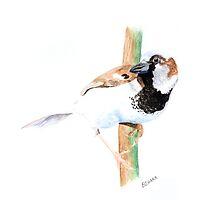 House Sparrow by Cory Behara