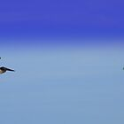 Pelicans On a Mission by KGMiller
